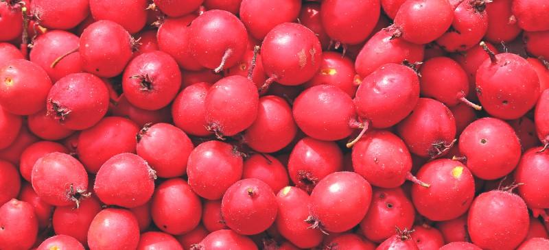 Hawthorn berry - Dr. Axe