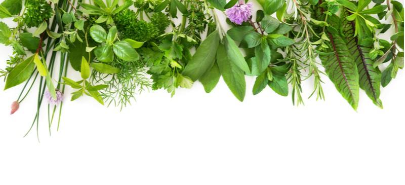 Antiviral herbs - Dr. Axe